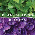Profile photo of Plantscaping & Blooms